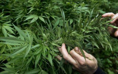 Abren cuarta tienda de marihuana para uso recreativo en Boston