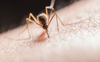 Massachusetts eleva a riesgo alto el virus del Nilo Occidental
