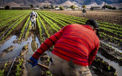 Ley para legalizar a trabajadores agrícolas espera voto en el Senado, en medio de crecientes divisiones