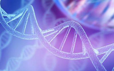 ¿Quieres conocer a tus ancestros? Conoce las 3 empresas principales de análisis de ADN