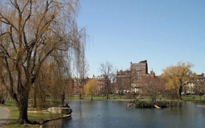Boston celebra el regreso de los paseos en botes Swan