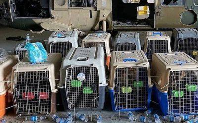 El Pentágono desmiente que se dejaran perros de servicio en Afganistán