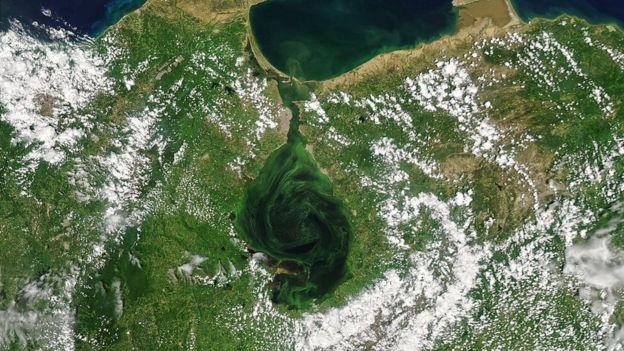 Las imágenes de satélite que muestran cómo el lago Maracaibo se está volviendo verde (y las consecuencias fatales que tiene)